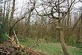 Great Britain's Wood - geograph.org.uk - 1255929.jpg