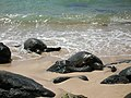 Green Sea Turtles at Turtle Beach - panoramio.jpg