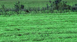 Green grass bgiu