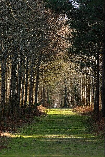 Fichier:Grimbosq forêt.jpg
