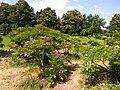 Gryshko botanical garden (May 2018) 12.jpg