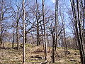 Händelö, den 6 april 2007, bild 6.JPG