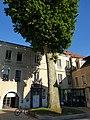 Hôtel de ville de Cusset avec son platane.jpg