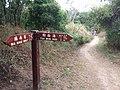 HK 西貢 Sai Kung District hiking Ma On Shan Country Park Ma Nam Wat Tui Min Hoi February 2021 SSG 11.jpg