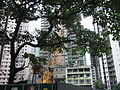 HK Mid-levels 衛城道 Castle Road tree construction site May-2012.JPG