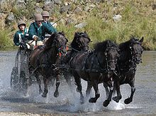 Four dark horses, harnessed to a black cart driven by three people. The horses are moving quickly through water, and in the background a bank covered with grass and rocks is visible.