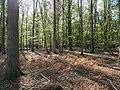 Hambach forest 26.jpg