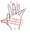 Hand Units of Measurement.PNG