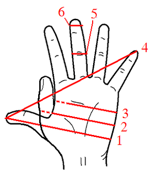 Palm (unit) - A diagram of various units derived from the human hand. The palm (3) was originally the width of the palm but was standardized as the somewhat smaller width of four digits (6). The related shaftment (1) and hand (2) were the width of the palm plus an open or closed thumb. The other units are the span (4) and finger (5).