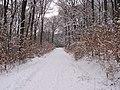 Hardtwald Seulberger Fahrweg Winter.jpg