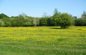Hatfield Forest - Image: Hatfield Forest 1