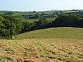 Hay meadow, Mapperton - geograph.org.uk - 558889.jpg