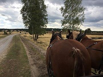 Heide 2018 2.jpg