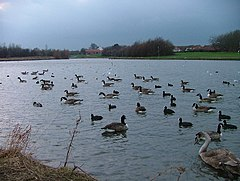 Hemlington Lake.jpg