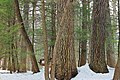 Henry's Woods (Revisit) (2) (12867514093).jpg