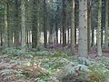 Hens Wood - geograph.org.uk - 262096.jpg