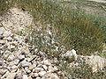 Herodion IMG 0667.JPG