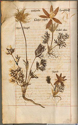 Herbarium vivum - Page from Herbarium vivum compiled by Hieronymus Harder (1523-1607) in 1576