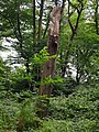 Highgate Wood 20170623 152521 (49401111317).jpg