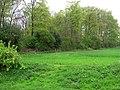 Hilton Plantation . - geograph.org.uk - 167859.jpg