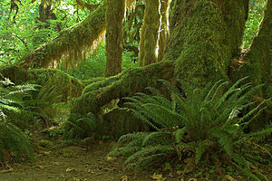 Hoh Valley, Olympic National Park, Oregon, USA