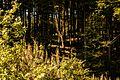 Hohenegg-11052015-20.JPG