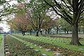 Hooglede Soldatenfriedhof R04.jpg