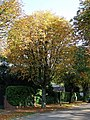 Horse Chestnut tree - geograph.org.uk - 592753.jpg