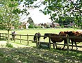 Horses at Redwings Horse Sanctuary - geograph.org.uk - 1385262.jpg