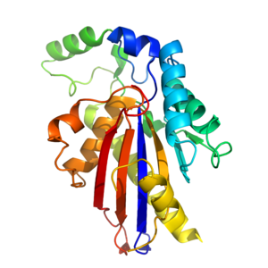 TP53-inducible glycolysis and apoptosis regulator -  A cartoon of the tertiary structure of TIGAR.