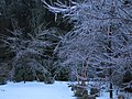Icy Wonderland Today - panoramio.jpg