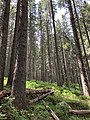 Incredible Carpathian forests.jpg