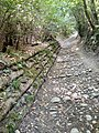 Interno Parco del Monte Barro verso Pian Sciresa.jpg
