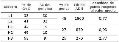 Isocoros. Frecuencia y riqueza en G+C y genes, en el genoma humano.