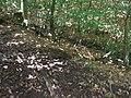 Issel rechter Zufluss Ex-Weg Quelle Abfluss.jpg