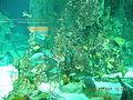 Istanbul Aquarium 39.jpg