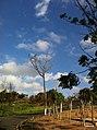 Itupeva - SP - panoramio (213).jpg