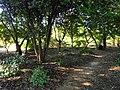 J. C. Raulston Arboretum - DSC06273.JPG