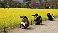 Japanese moms with their camera gear at Hamarikyu gardens, Tokyo (8570416286).jpg