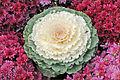Jardin éphémère (Nancy) (3975115422).jpg
