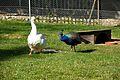 Jardin Botanique Birds.jpg