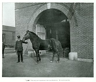 """History of Butte, Montana - """"Jim,"""" the sole surviving horse of the 1895 Kenyon-Connell Warehouse explosion."""