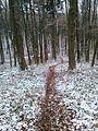 Kamienna Góra - ścieżka w lesie 1.jpg