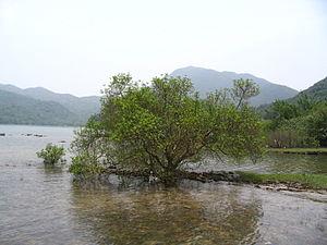 Chek Keng - Mangrove at Chek Keng.