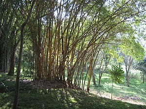 Karanji Lake - Bamboo Forest