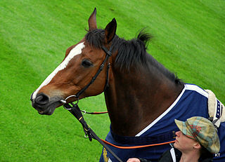 Kauto Star French-bred Thoroughbred racehorse
