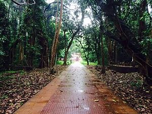 Sacred groves of India - Mannan Purath Kavu, Nileshwaram, India.