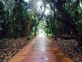 Kavu - Mannan Purath Kavu, Nileshwaram