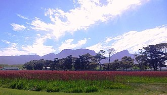 Kenilworth, Cape Town - Image: Kenilworth Racecourse Conservation area CT 9