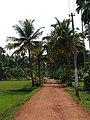 Kerala 13.jpg